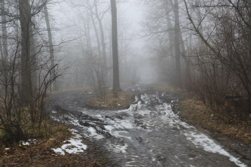 In the fog. Nikon Spring Nature Russia Morning пейзаж утро Landscape Mist Forest Path Haze Ice деревья туман Дорога мгла лед снег дымка весна Лесная тропа Tree Snow Fog Forest Road Dirt Road