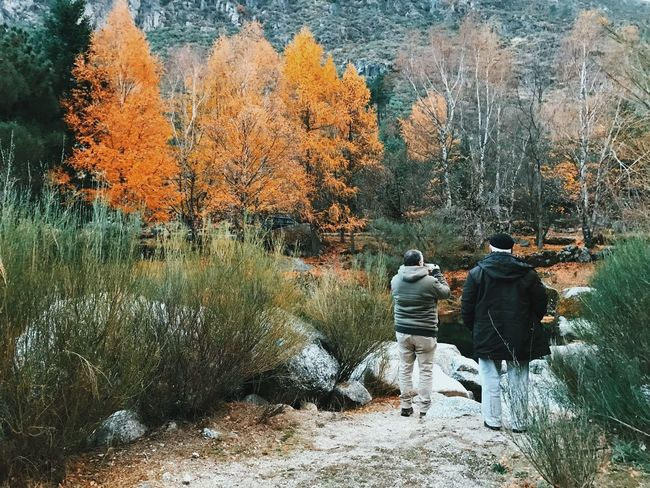 Rear View Tree Autumn Nature Real People Full Length Beauty In Nature Bare Tree Walking Togetherness Tranquility Day Outdoors Leisure Activity Men Two People Forest Winter Warm Clothing