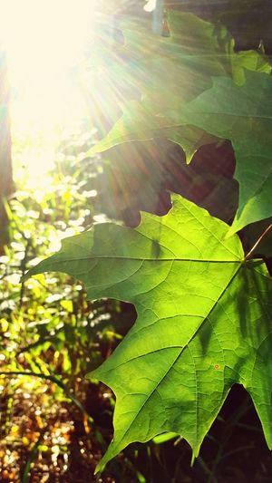 Showcase July Pure Michigan Trees #leaves #sunlight #warm Color Green Trees And Leaves EyeEm Nature Lover