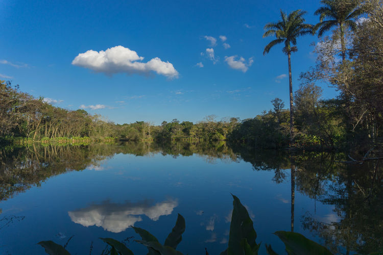 mirror at sky No People Park Tree Water Lake Blue Reflection Sky Landscape Cloud - Sky Standing Water Reflection Lake Swamp Calm Reed - Grass Family
