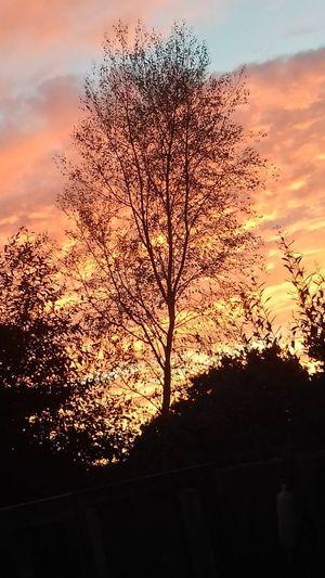 sunset Silhouette Multi Colored Close-up Landscape