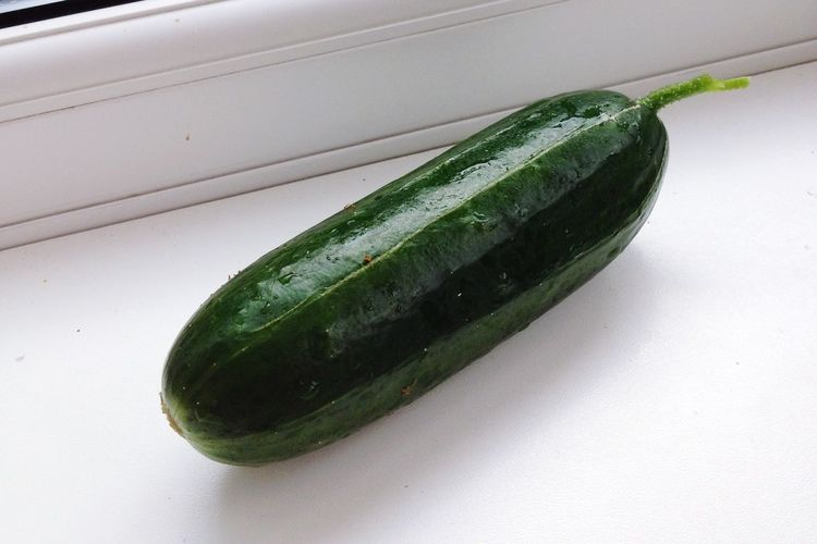 Harvest Cucumber First Crop Proud Nature Fresh Produce Excited