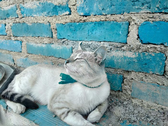 Turquoise By Motorola Cat Photo