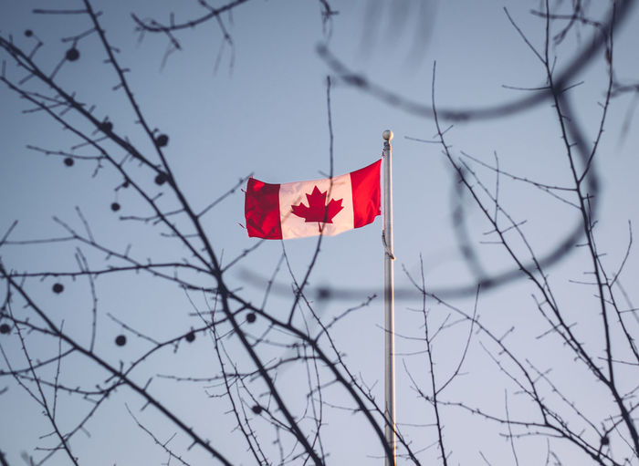 Bare Tree Branch Canada Flag Day Flag Low Angle View Maple Leaf Nature No People Outdoors Patriotism Red Sky Through Trees Tree