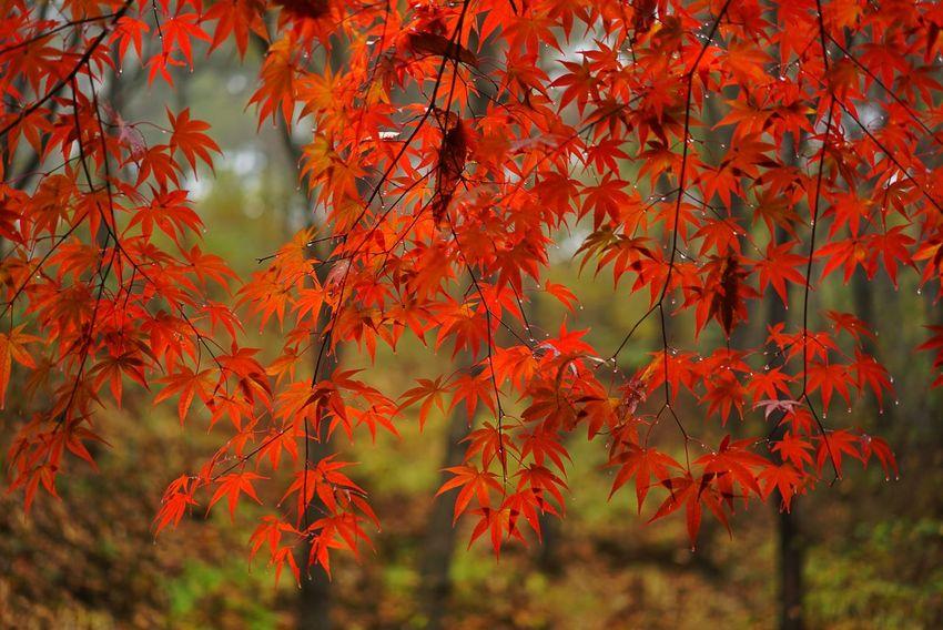 Korea Photos Autumn Fall Treepark Autumn Colors Nature Fall Beauty