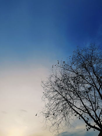 Tree branches with blue sky image Branches Branches And Sky Winter Blue Tree Branch Good Weather Bird Bird Of Prey Flying Spread Wings Flock Of Birds Silhouette Mid-air Sky Animal Themes Sunset Orange Color Sun Evening Sunbeam Sky Only Romantic Sky Dramatic Sky Shining Scenics