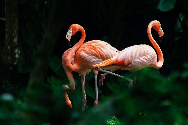 Flamingos on field in forest