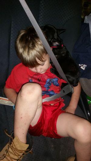 Puppy Sleeping On Sleeping Boy Best Friends ❤ Family 🙏🙌 Preschooler Peaceful Sleeping Tired Missouri Ozarks, USA 💥💖 Puppy French Bulldog Seatbelt Child Childhood Sitting Red Exhaustion Napping