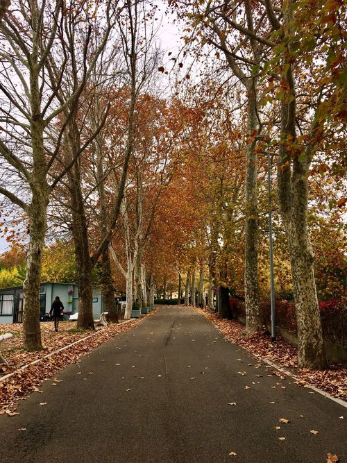 Tree Autumn Change Leaf Nature The Way Forward Outdoors Beauty In Nature Tranquility Day People Adult Road Scenics One Person Adults Only Branch Only Women Sky