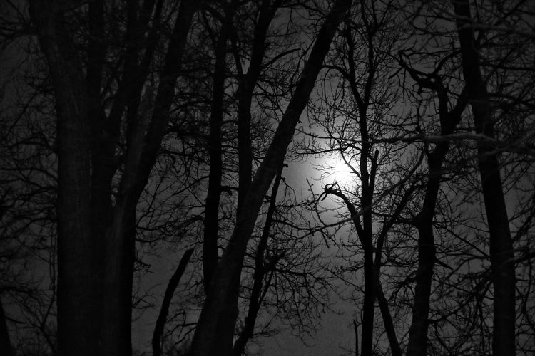 Welcome To Black Tree Nature Bare Tree Sky Outdoors Black & White Night Moon Silhouette Winter Branches Canada EyeEmNewHere
