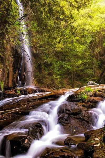 -Iwayado Falls- Waterfall Water Landscape Forest Beauty In Nature Long Exposure Outdoors Travel Destinations Canon5Dmk3 Japan Travel Sigma 35mm Art Nature Growth Seto Canonphotography Landscape_Collection Landscape_photography Falls