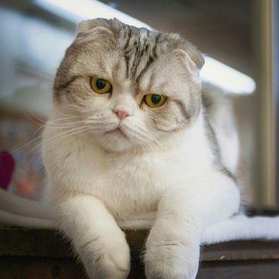 Cok çirkin Bir Kedi bu