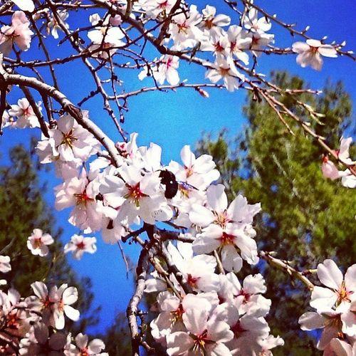 ¡Por fin! ¡Calorcito! Parquequintadelosmolinos Madridon XperiaZ1 Igersmadrid blooming