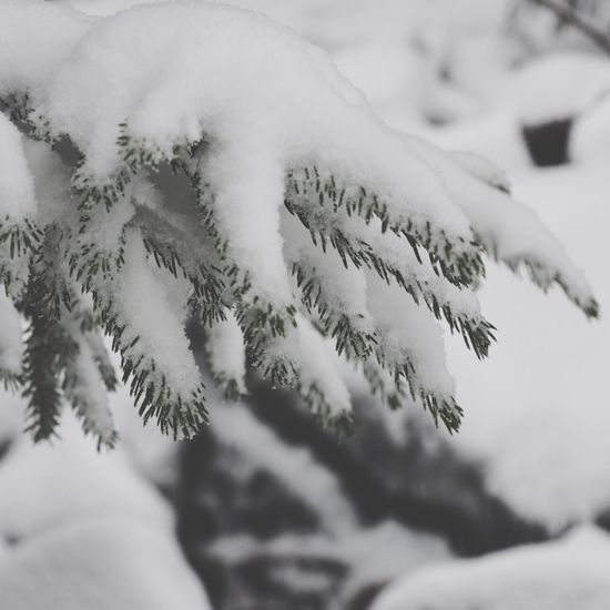 EyeEm Selects Winter Snow Cold Temperature White Color Close-up Celebration Day No People Christmas Outdoors Nature Beauty In Nature Snowflake Tree