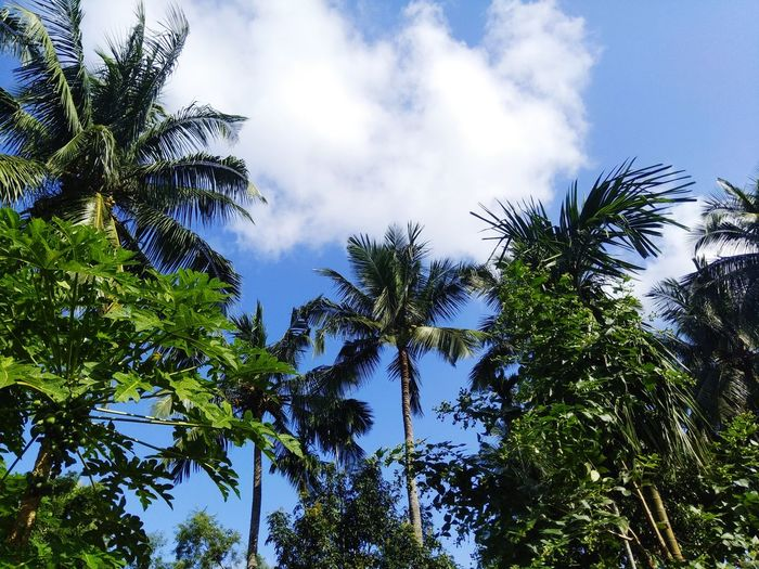 shining sky,green beauty,natural beauty Natural Beauty Trees Shining Sky Tree Tree Area Branch Forest Blue Leaf Sky Green Color