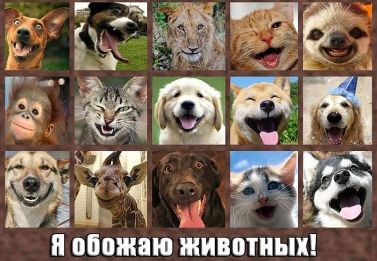 animal representation