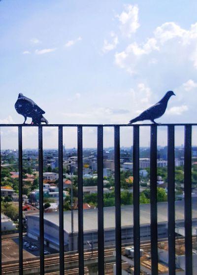 Bird perching on railing by sea against sky