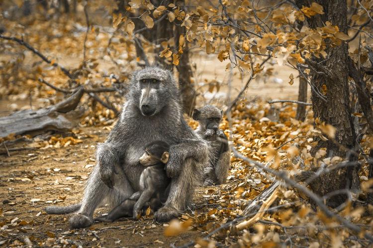 Monkeys sitting in forest