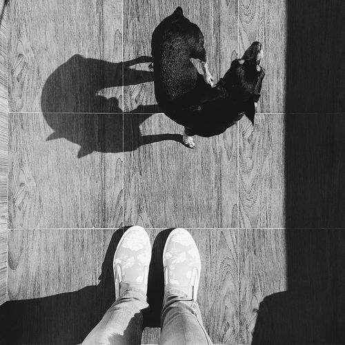 Shoe Lifestyles Animal Themes Blackandwhite Shushannaagapiphoto Shushannaagapi Iphonephotography Mobilephotography Iphoneonly IPhoneography Shadow Shadows & Lights Silhouette Shades Of Grey Domestic Animals Pets Dog Lines Shoes Long Goodbye EyeEmNewHere Vscocam VSCO