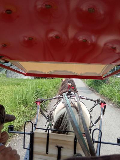 Horse cart on grass