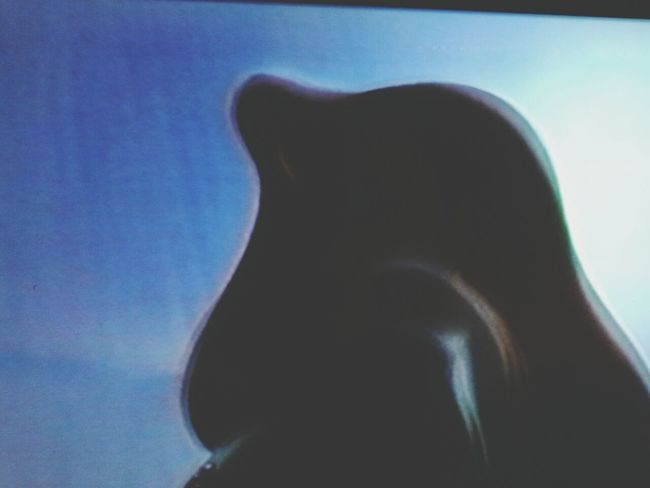 Roger Rabbit ♡