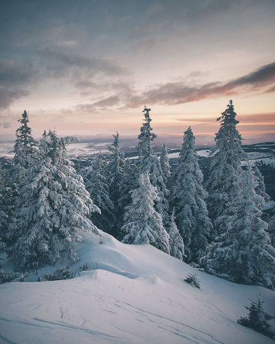 Beauty In Nature Cloud - Sky Cold Temperature Covering Environment Landscape Mountain Nature No People Non-urban Scene Plant Scenics - Nature Sky Snow Snowcapped Mountain Sunset Tranquil Scene Tranquility Tree Winter