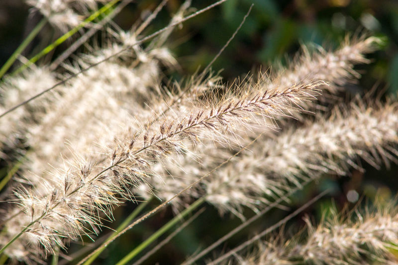 Grass Nature Growth Plant Field Close-up No People Rural Scene Beauty In Nature Day Macro Photography Macro