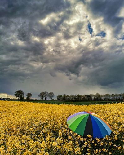 Scenic view of yellow flowers on field against cloudy sky