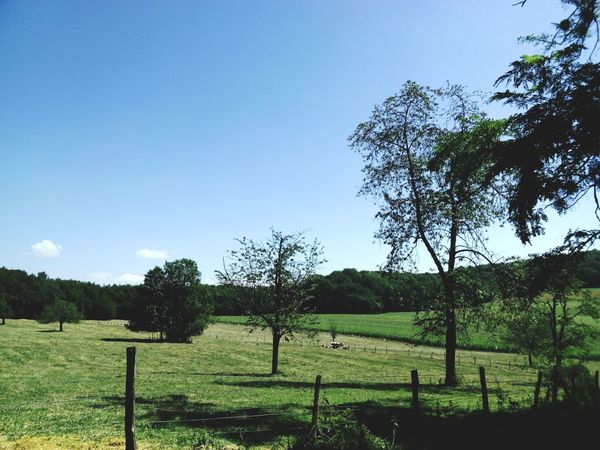 Alsace Wild Nature Relaxing Forest Beautiful Nature Sun Vaches vache