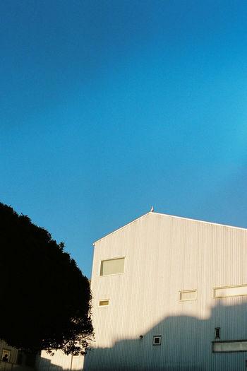 Analogue Photography California California Dreamin EyeEmNewHere Film Ishootfilm Travel Trip WestCoast Analog Architecture Bird Blue Clear Sky Day Film Photography Filmisnotdead House Minimal Sky Sun White Background Go Higher