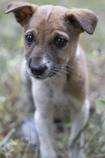 Close-up portrait of dog standing on field