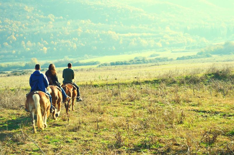 Rear View Of Horse Riding On Landscape