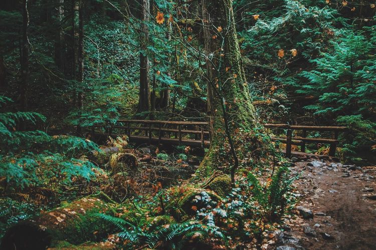 Forest Nature Tranquility Tranquil Scene Beauty In Nature Outdoors Green Color Woods Adventure Explore Oregon