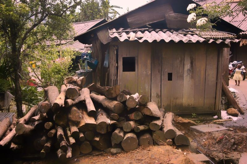 Vietnam sapa Built Structure Architecture Building Exterior Building House Tree Plant Nature Day No People Wood - Material Residential District Sunlight Wood Outdoors Log Timber Stack Roof Firewood