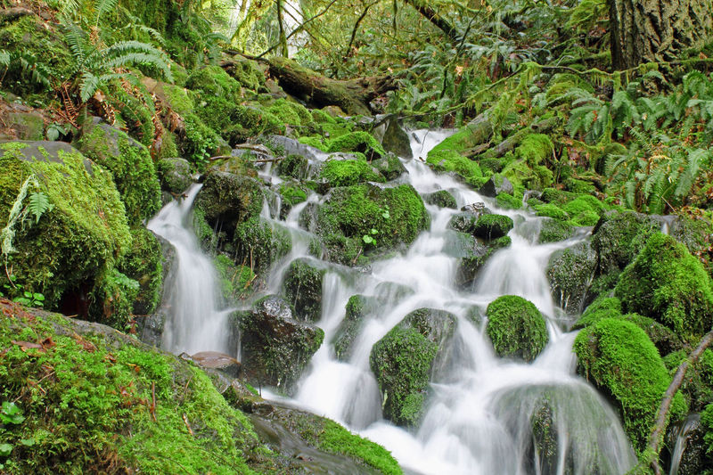 Beauty In Nature Blurred Motion Cascade Environment Flowing Flowing Water Forest Green Moss Motion Nature Nature Photography Oregon Oregon State Parks Pacific Northwest  Scenic Spring Springtime Stream Temperate Rainforest Tranquil Scene Water Waterfall
