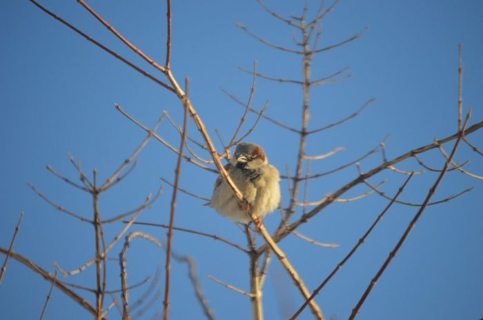 Photography On A Nice Day In Back Yard Little Bird Urban Birds Bird Photography