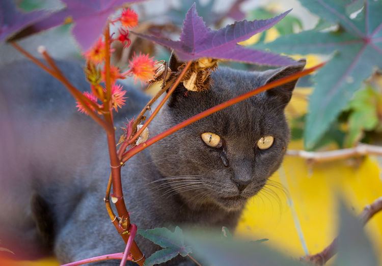 The Cheshire Cat Animal Themes Close-up Day Domestic Animals Domestic Cat Flower Nature No People One Animal Outdoors Pets