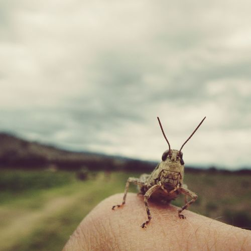 Cropped image of finger holding grasshopper against sky