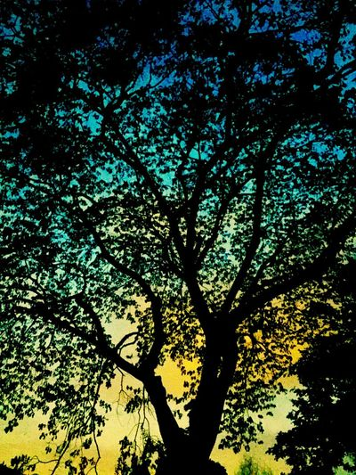 Silhouette of tree during sunset Tree Nature Low Angle View Silhouette Beauty In Nature Day Forest Outdoors Scenics Branch No People Sky sunset