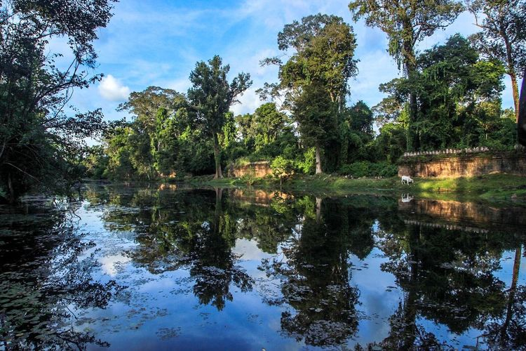 Angkor wat Angkor Wat, Cambodia Angkor Wat Water Tree Reflection Sky Nature