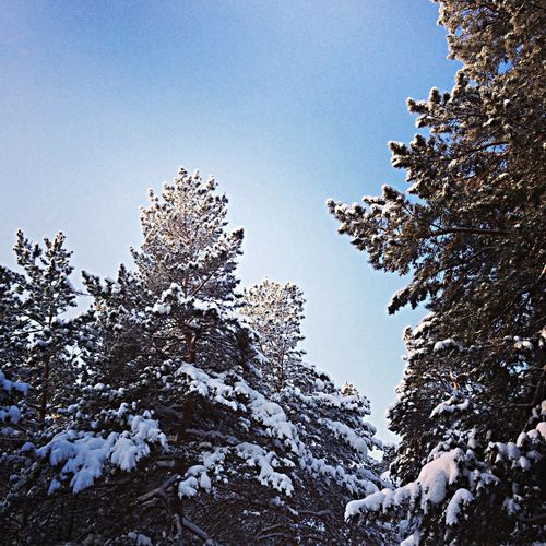 Missed? Sky My Sky Pattern Pieces Tree Snow Trees Snow Snow Day Snow Forest Pine Trees Backgrounds Background Snow Covered Snow ❄ Russian Winter Nature No People EyeEm Nature Lover Blue Trees And Sky
