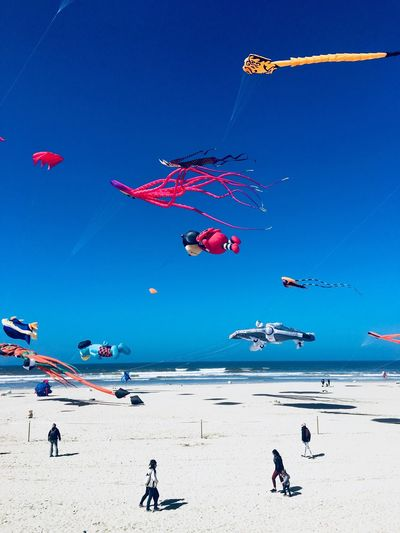 Kite festival. Berck Plage Ladybug Sea Sand Kite Festival Childhood Beach Land Sky Nature Water Beach Land Sky Nature Water Flying Blue Kite - Toy Group Of People Leisure Activity Day Holiday Kite Real People Beauty In Nature Wind Vacations Sunlight