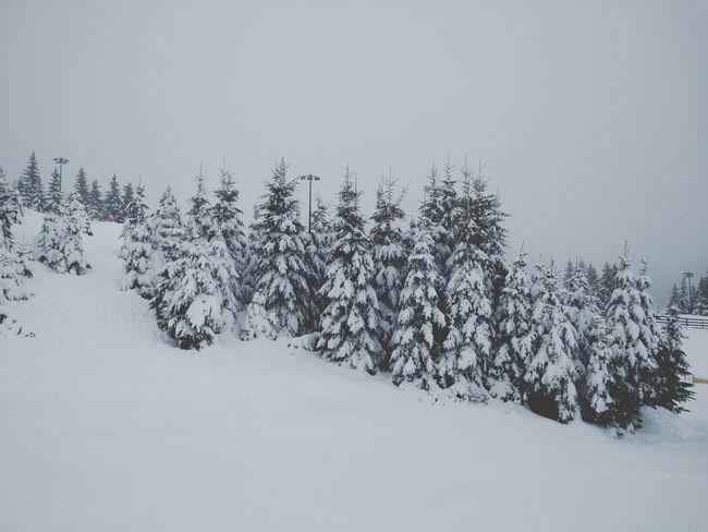 Il a neigé... Neige Tree Snow