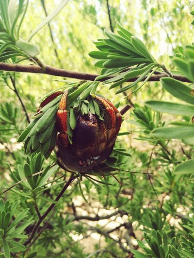 Nature One Animal Green Color Nature Animals In The Wild Animal Wildlife Day Beauty In Nature Tree Crab Mexico Contoy Island Focus On Foreground Leaf Outdoors No People Close-up Animal Themes Plant Growth
