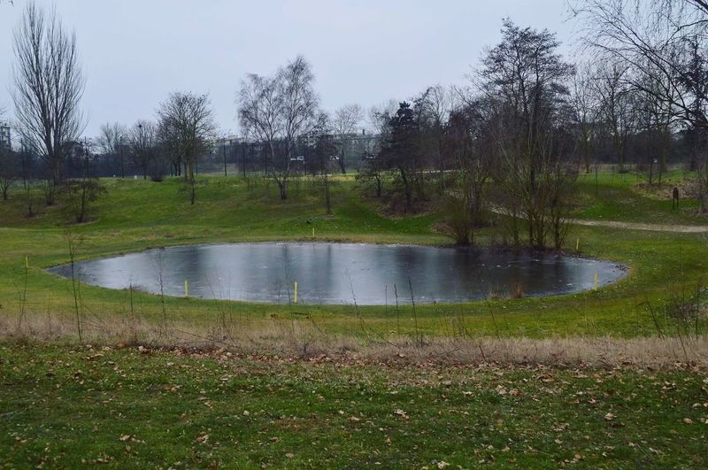 Parc du Tremblay Tree Grass Water Nature Green Color Landscape No People Sky Outdoors Beauty In Nature Golf Golf Course Day Valdemarne Paris, France  Champigny IleDeFrance Marre Marre Gelée Gel #eyeem Gallery EyeEm Nature Lover EyeEm Best Shots Eyeemphotography Eye4photography
