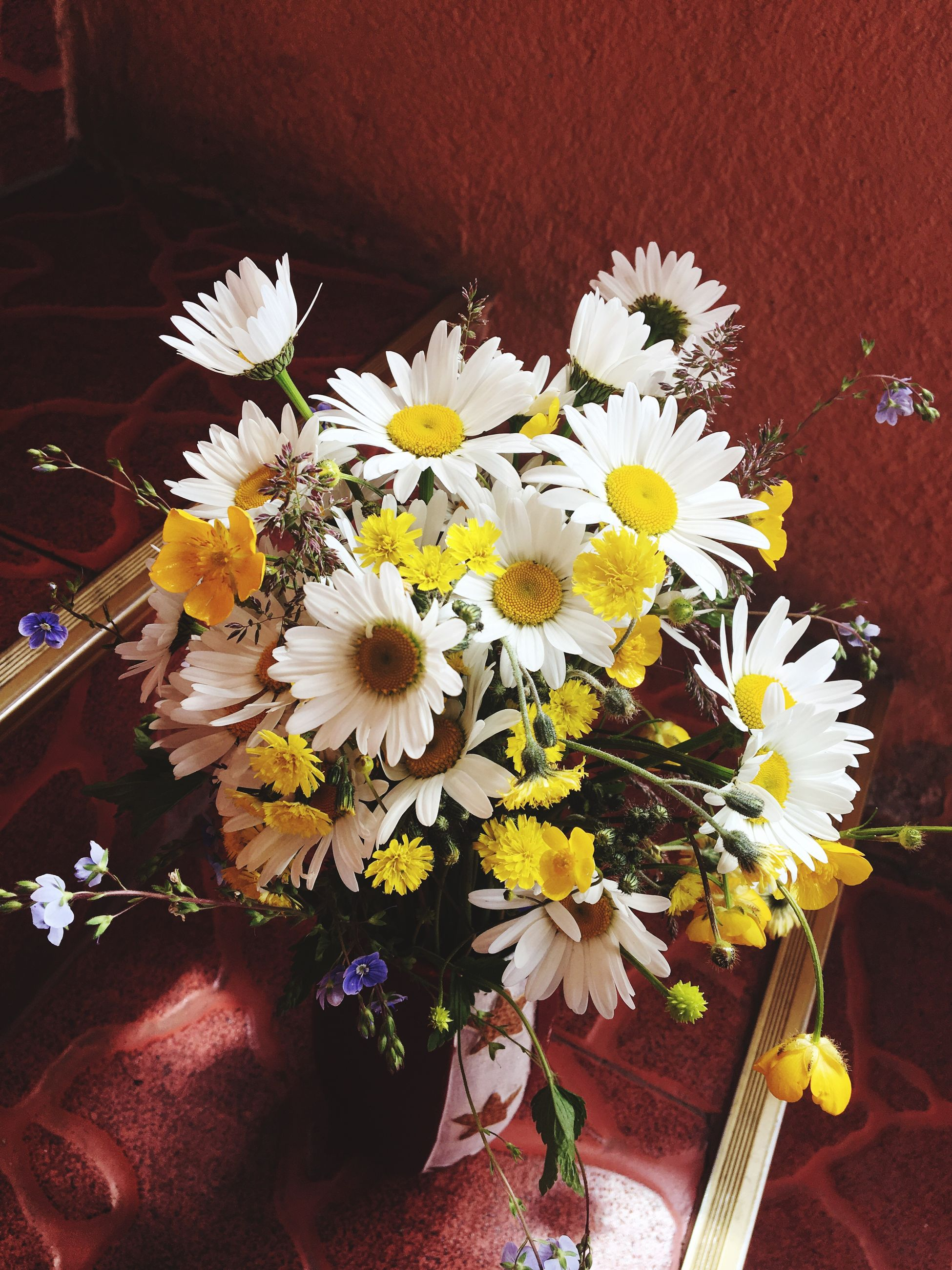 flower, petal, freshness, fragility, indoors, high angle view, white color, flower head, table, potted plant, decoration, vase, growth, beauty in nature, nature, plant, blooming, no people, close-up, daisy