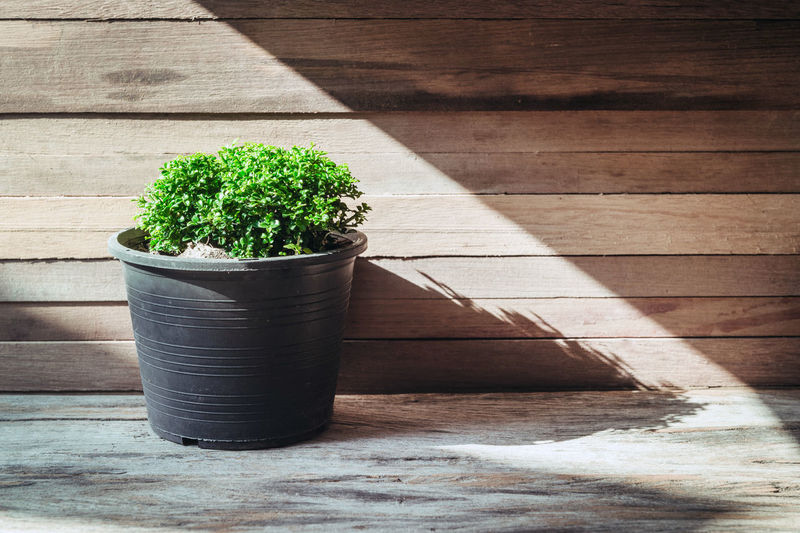 Close-up of potted plant against wooden wall on porch