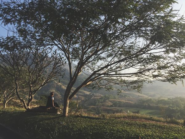 Tree One Person Field Nature Landscape Outdoors Tranquility Branch Beauty In Nature Grass Only Women