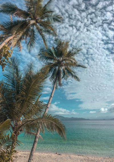 Tree Plant Water Sky Beauty In Nature Sea Tranquility Nature Beach Palm Tree Tropical Climate Cloud - Sky