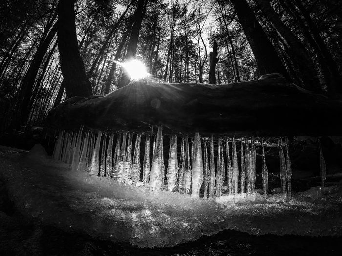 First Eyeem Photo New Hampshire CANAAN Icicles Trees Black And White Log SunForest Spring Water Logs Woods